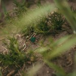krisktynu-fotografas-radviliu-sodyba-seimos-fotografai-goodlife-photography-23