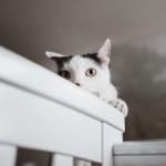 seimos-nesciosios-fotosesija-namuose-laukimas-goodlife-photography-10