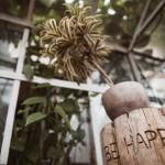 seimos-svenciu-fotografas-gimtadienio-fotografavimas-suzadetuviu-ziedas-panama-food-garden-goodlife-photography-03